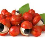 <thrive_headline click tho-post-554 tho-test-30>Utiliser le guarana pour la concentration</thrive_headline>